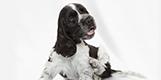 高温多湿な日本では犬は皮膚病にかかり易くなります。トラブルが起こりにくい体に。