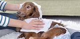 病気や事故、年齢などで介護が必要になってしまった愛犬と向き合う為に。