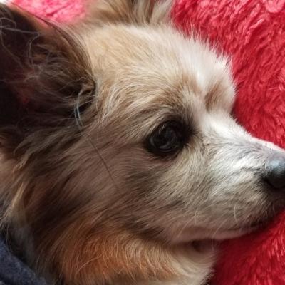 犬の背中にできた腫瘍も出血が止まり