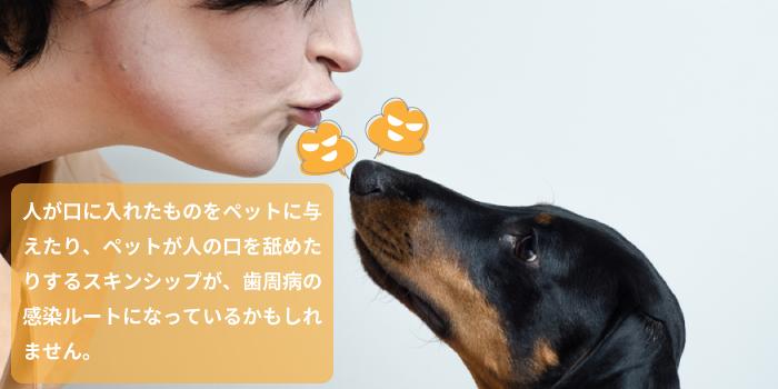 人が口に入れたものをペットに与えたり、ペットが人の口を舐めたりするスキンシップが、歯周病の感染ルートになっているかもしれません。