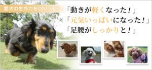 DOG STANCE