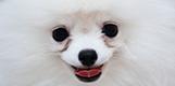 愛犬の目の周りの涙やけが気になる。そんな時はドッグフードの見直しを。