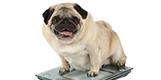 愛犬のダイエットは、与える量と運動。そして良質なドッグフード選びから。