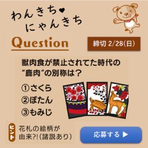 わんきちにゃんきちプレゼントクイズ202101-02