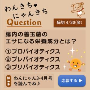 わんきちにゃんきちプレゼントクイズ202103-04